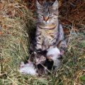 Кот и скотина - родственные слова?