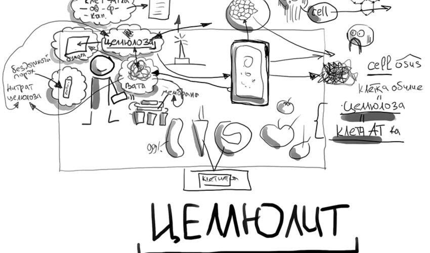 Этимология слова ЦЕЛЛЮЛОЗА, целлюлит, сотовая связь и клетчатка