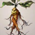 Мандрагора. Драконо-человеко-растение.